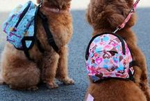 Stylish Dog Leashes, Harnesses and Collars / Use the same dog collar, leash and harness every day? No way when there are so many fabulous dog walking accessories to choose from! Good luck deciding!!