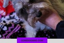 Dog Health Care Tips / As dog parents, we want to do our absolute best to ensure our pups are as healthy and well cared for as possible. I created this board as a way to provide you with the best dog health care tips, for all ages.