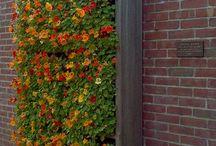 Plantenbakken / Bijzondere plantenrekken voor in de tuin of balkon.
