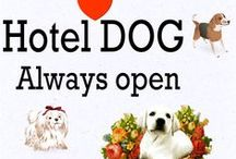 ♡ Hotel Dog ..feel welcome :-) / Hotel Dog = Allways open <3  All inclusive, much love, food, play and sleep comfortably. / by . ♥༻ Little Dreamer ༺♥  .