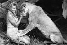 """Born Free / Watch the movie, Born Free, about how Joy & George Adamson hand reared three lion cubs. Joy loved Elsa, the smallest. When she got too big, Joy was told Elsa had to go to a zoo. Joy say """"No! She was born free and she shall live free!""""  After the movie ended, the lions were sent to zoos and Virginia felt sad for them. She set up the Born Free Foundation after this. No animal wants to be locked up in a cage for 20, 30, 40 or more years of their lives!"""