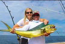 Panama Sportsfishing / Panama has great sport fishing on both the Pacific and the Caribbean sides. We have big Marlin, Yellowfin Tuna, Sailfish, Swordfish, Mahi Mahi (Dorado or Dolphin Fish), Wahoo, Snapper, Grouper, Pompano, Jacks . . . We offer bespoke sport fishing vacations in top quality boats and very experienced crew. The fishing boats are 37'and 66' and we also have a larger luxury yacht 98' (that has two fighting chairs) so you can go on a fishing trip with the wife and family