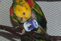 Companion Parrot Care / Living with pet parrots, the best way possible.