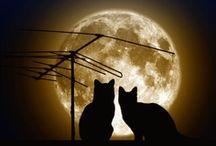 Cats / I love cats!