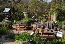 Indigenous Plant Nursery / Wholesale & retail indigenous plant nursery