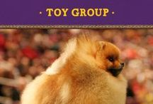 Toy Group