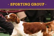 Sporting Group