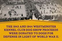 140 Years of WKC / Interesting and fun facts over 140 years of the Westminster Kennel Club Dog Show.