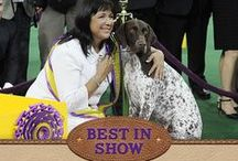 140th Best in Show / Experience the best moments of the 140th Westminster Kennel Club Dog Show!
