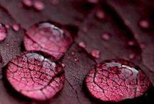 Colours - Burgundy