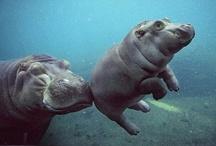 Animals! / by Jennifer Sperl