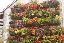 flora and fauna.