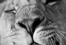 Animals are Beautiful! / by Tara Clair Candoli