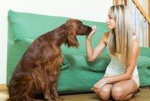 Vizsla/Dogs