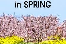 California in Spring / California in March, April, May: Travel-worthy events you'll love, what you need to know. From California Travel Expert Betsy Malloy at gocalifornia.about.com