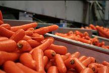 Peen | Karotte | Carrot