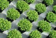 Kruiden | Kräuter | Herbs
