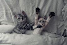 Cute !!!!!