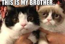 Cats, Grumpy