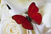 Butterfly's & Insects