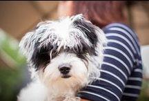 Doggie / My doggie Layla