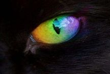 Cat Eyes / I love cats and the color of the eyes. I have a cat: Silver.