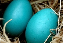 Robins Egg Blue Things / by Genevieve Faciana