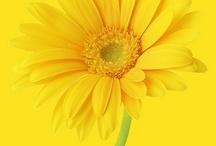 Yellow / by Genevieve Faciana