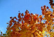 Jesień na moim osiedlu / Idąc do sklepu, zrobiłam wielką pętlę I obcykałam teren przy moim osiedlu. Jesień zachwyciła mnie swoimi barwami. 8 września 2014