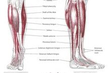 A_Shape_Leg_and_Ankle