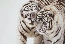 Animals | Wildernis