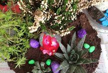 Terrarium çiçek