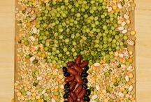 magok, termések