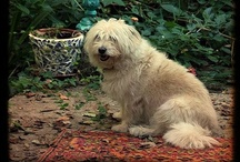 dogs that look like my dog, Marilyn
