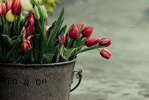 Flower Gardening :) / by Vicki McIntosh Holt-waddell