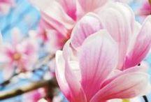 Hargraves Gardening Tips / Hargraves Nursery's weekly gardening tips for weekend gardening inspiration.