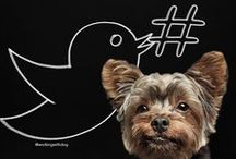 Dog Marketing / Marketing Genius for Petpreneurs: tips, tools, templates & insights for dog brands