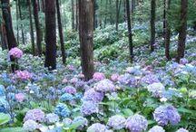 Flowers, Plants & Nature / Flowers, plants & nature!