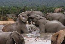 Wildlife and scenic beauty