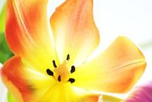 Kwiaty / Kwiaty