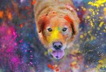 Color.Dog / color palettes + inspiration for dog brands