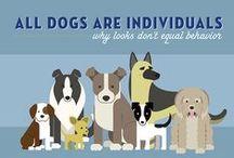 Info.Dog / dog infographics
