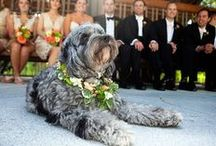 Wedding.Dog / Ideas + Inspiration for including your dog in your wedding