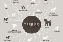 Dog Breeds / Facts, figures + photos: the dog breeds you love