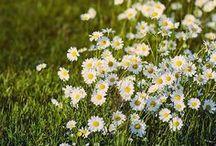 Flores y plantas / Fotos de plantas y flores
