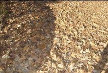 Autunno / Le più belle foto delle Terme di Boario in #Autunno