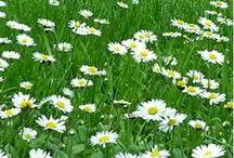 Primavera / Una passeggiata nel Parco delle Terme di Boario per vivere la natura che si risveglia e si colora di primavera!