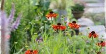 Kotipihalla - Garden at home