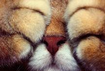 A Cat Scratch...