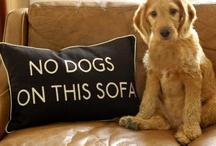 Dog TALES....